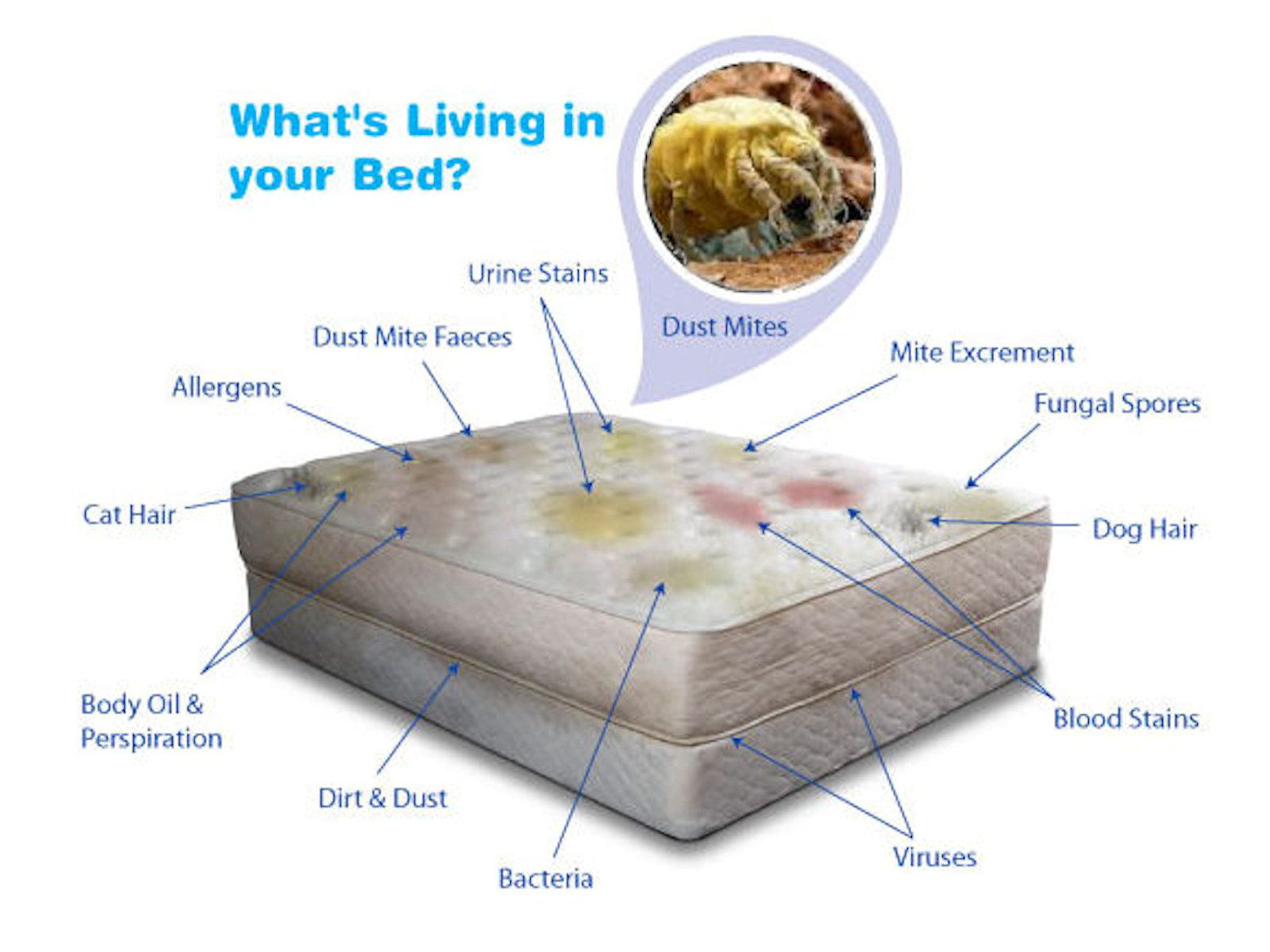 Mattress Cleaning - What is in your mattress