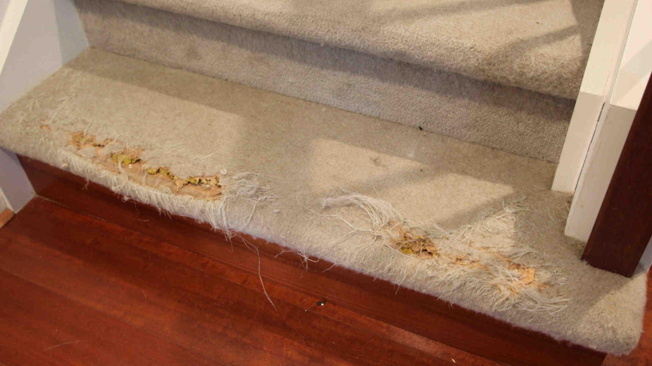Carpet Repair - Carpet damage on stairs