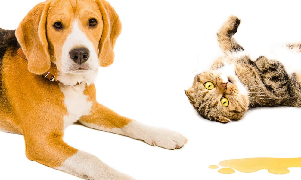 Urine and Odour Treatments - Who did that the cat or the dog